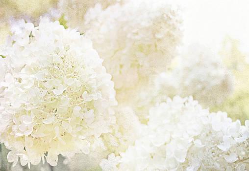 Summer Snowballs by Margaret Hormann Bfa