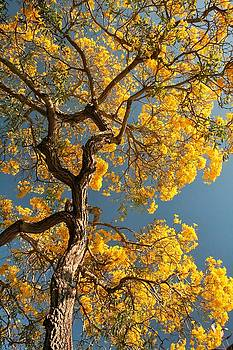 Summer Tree by Ruthann Carlson