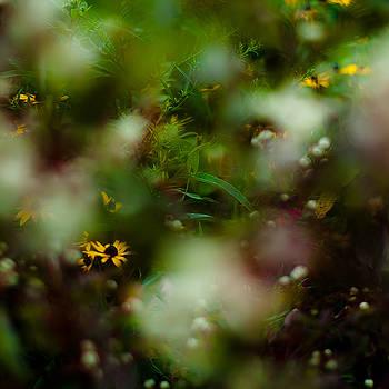 Summer Wildflowers 003 by Noah Weiner