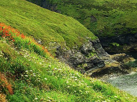 Summer Wildflowers - Cornish Coast by Connie Handscomb