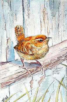 Summer wren by Patricia Pushaw