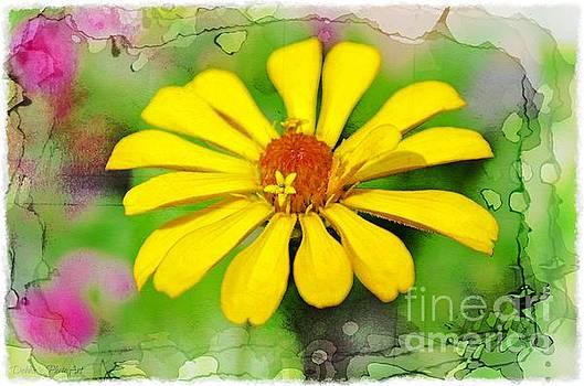 Summer Zinnia  by Debbie Portwood