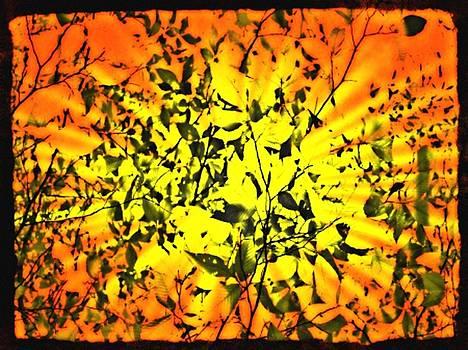 Sun Dappled Leaves by Robin Regan