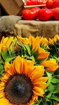 Sun flowers and tomatoes by Bruce Carpenter