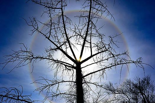 Sun Halo by Chris Burke