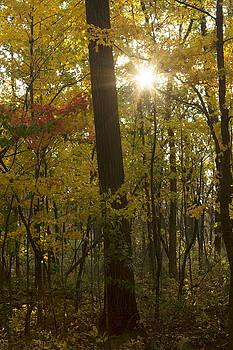 Sun Peeking Through by Amanda Kiplinger