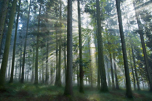 Sun Rays in Forest by Silke Magino