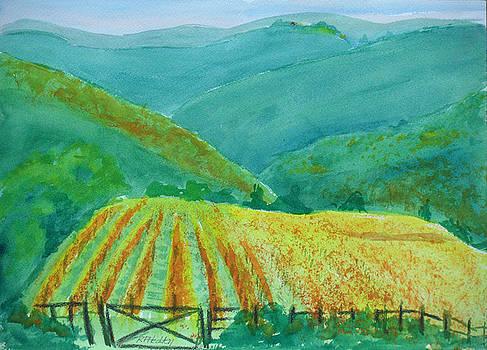 Sun Setting on Tuscany Vineyard by Robert P Hedden