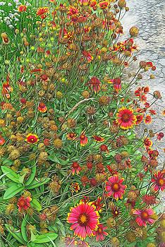 Cindy Boyd - Sunburst Gaillardia Garden
