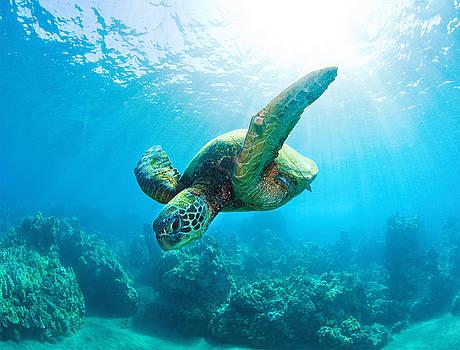 Sunburst Turtle by Monica and Michael Sweet