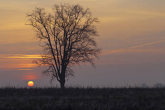Sunday At Dawn by Cesare Bargiggia