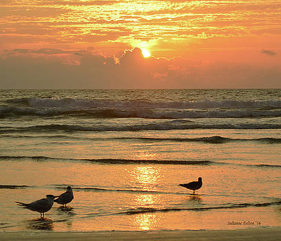 Sunday sunrise 5-1-16 by Julianne Felton