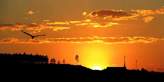 Sundown Freefall by Adele Moscaritolo
