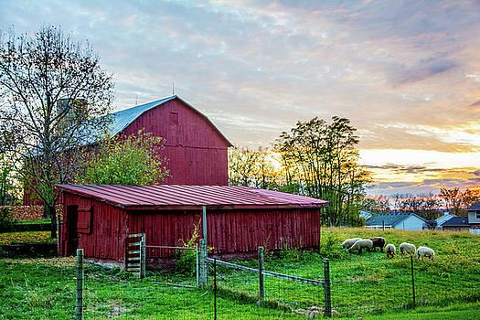 Randall Branham - Sundown heading to barn