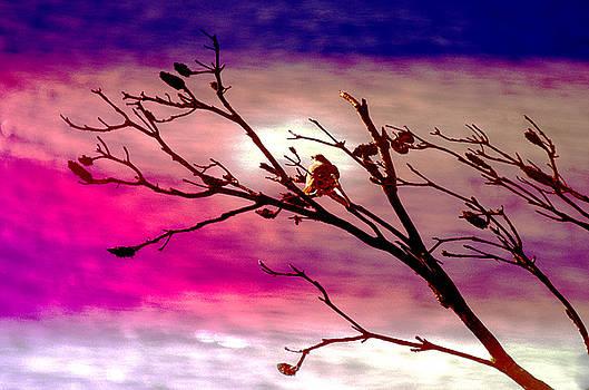 Holly Kempe - Sundown