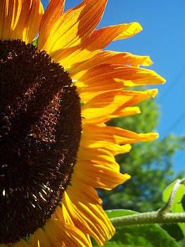 Sunflower 139 by Ken Day