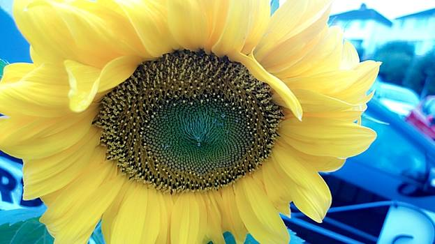 Sunflower by Agnes V