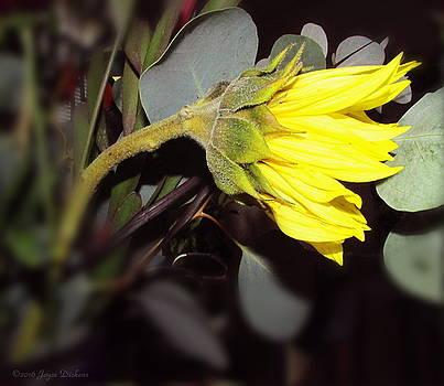 Joyce Dickens - Sunflower Awakening Two