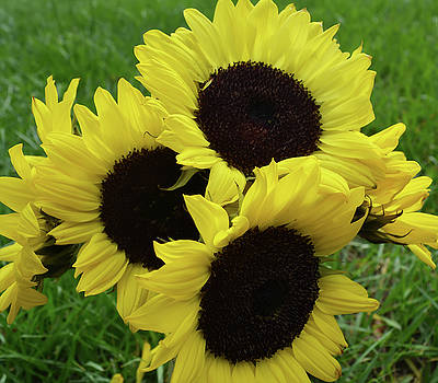 Sunflower Bouquet by Aimee L Maher Photography and Art Visit ALMGallerydotcom