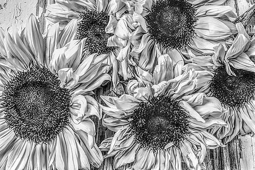 Sunflower Bunch Line Art by Garry Gay