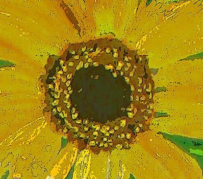 Anne Cameron Cutri - Sunflower closeup