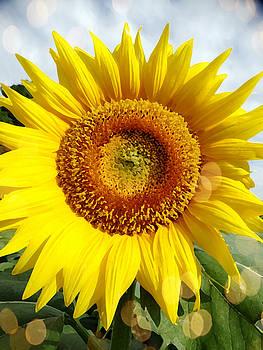 Sunflower Drybrushed Art by Rebecca Overton