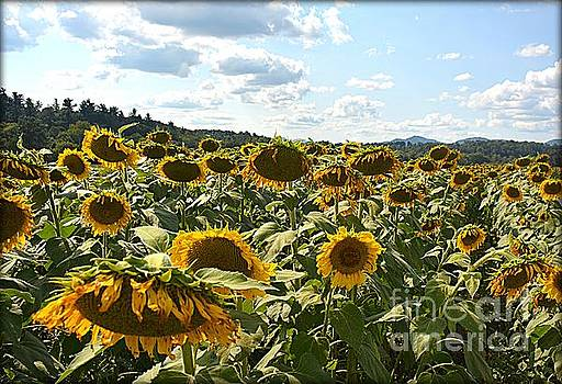 Sunflower Field by Janice Spivey