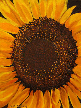 Sunflower Heart by Stephen Ponting