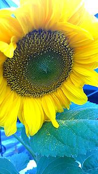 Sunflower II. by Agnes V
