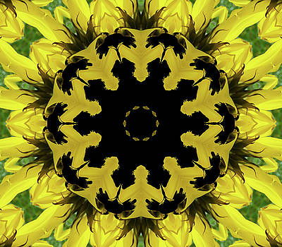 Sunflower Kaleidoscope by Aimee L Maher Photography and Art Visit ALMGallerydotcom