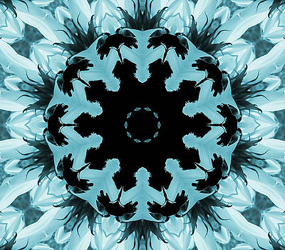 Sunflower Kaleidoscope in Blue by Aimee L Maher Photography and Art Visit ALMGallerydotcom