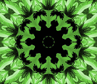 Sunflower Kaleidoscope in Green by Aimee L Maher Photography and Art Visit ALMGallerydotcom