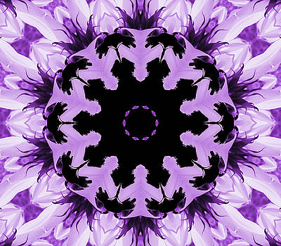 Sunflower Kaleidoscope in Purple by Aimee L Maher Photography and Art Visit ALMGallerydotcom