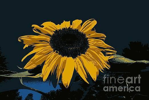 Sunflower Manipulation  by Eunice Miller