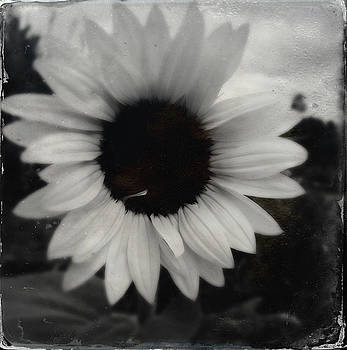 Sunflower No 2 by Les Cunliffe