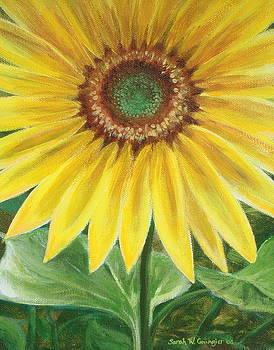 Sunflower by Sarah Grangier