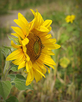 Sunflower Show Off by Linda Mishler