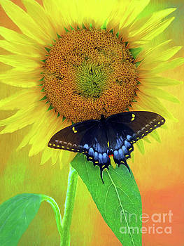 Sunflower With Company by Marion Johnson