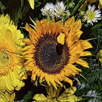 Sunflowers 1 by Mark Orr