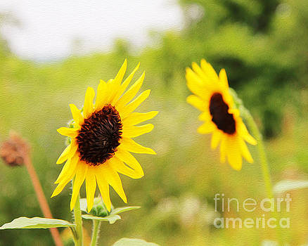 Sunflowers by Joseph Re