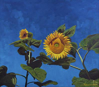 Sunflowers by Marco Busoni