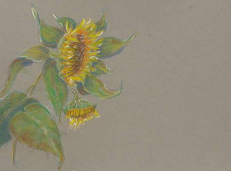 Sunflowers Tuscany Image Last of Summer by Phyllis OShields