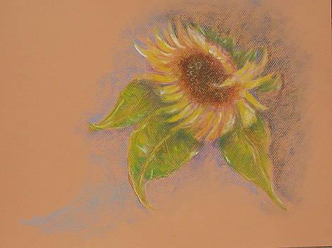 Sunflowers Tuscany Image of Summer by Phyllis OShields