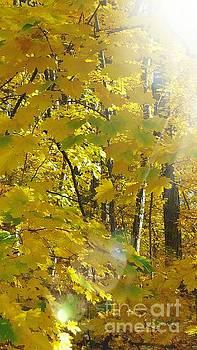 Sunglow by Marlene Williams