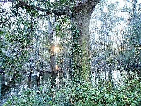 Sunlight on the Edisto River by Kay Gilley