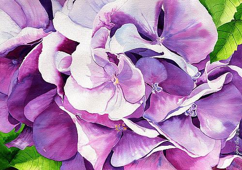 Sunlit Hydrangea by Janis Grau