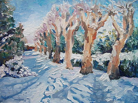 Sunlit Pollards after Snow by Wendy Head