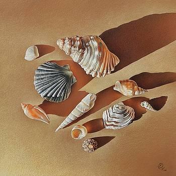 Sunlit shells by Elena Kolotusha