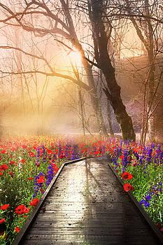Sunlit Wildflowers by Debra and Dave Vanderlaan