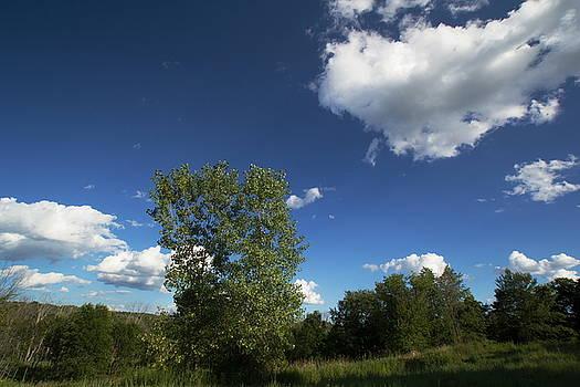 Sunny Day by Amanda Kiplinger